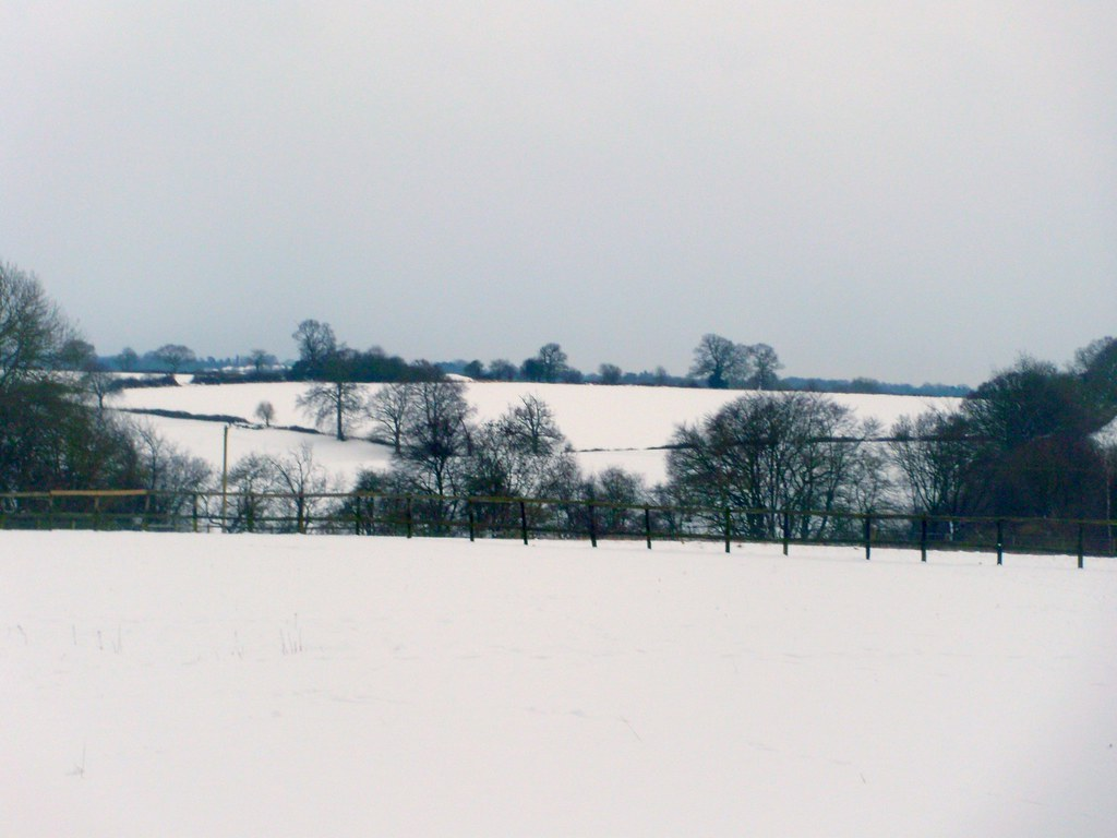 Trees against snow Tring to Berkhamsted