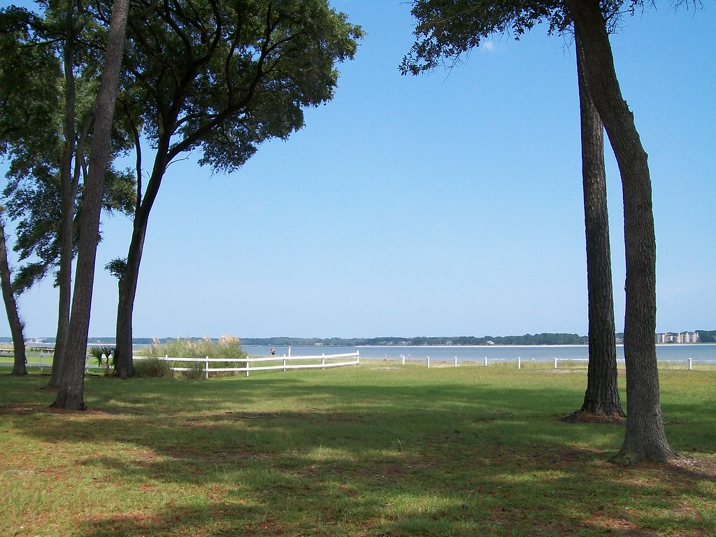 Trees and Coast, Daufuskie Island
