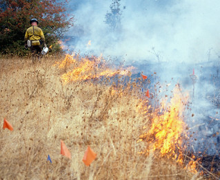 research prescribed burn | by Oregon State University
