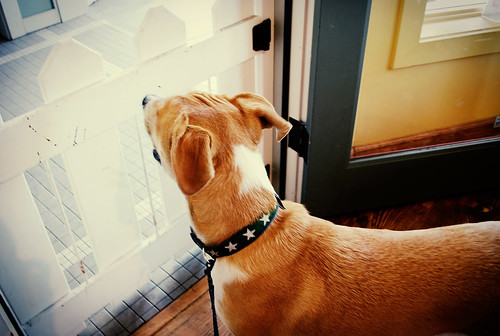 pablo's new collar | by i heart napa