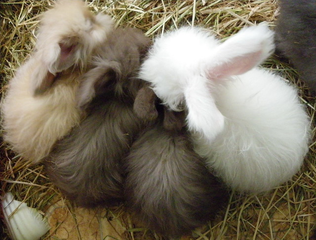 4 coloured bunbuns