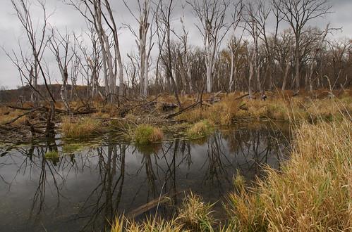 Hwy 61 Backwater 1 by nataraj_hauser / eyeDance