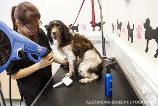 Ruby getting a blowdry | by Alexandra Bone Photography