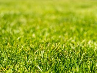 Grass | by wwarby