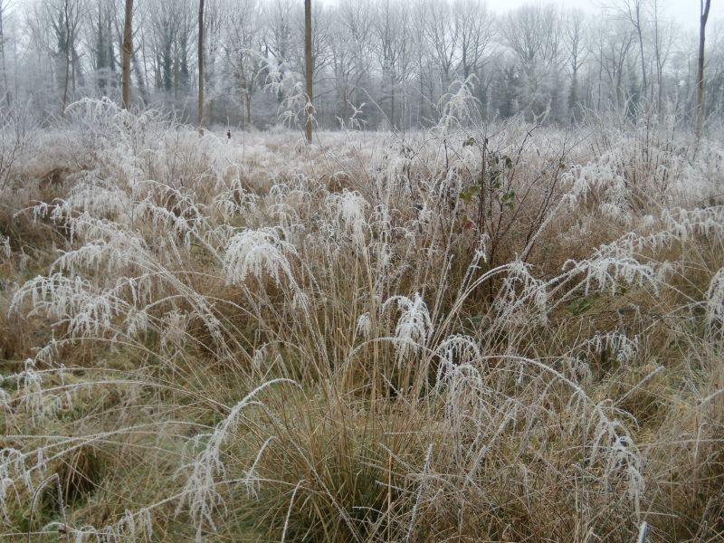 Frosty grass Wanborough to Godalming