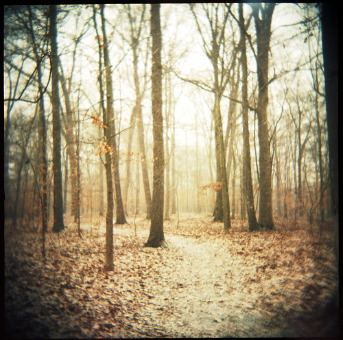 trees snow 120 film forest newjersey holga path fnd chatham portra 400nc greatmarsh