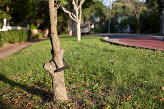 Tree Lock | by HelenPalsson