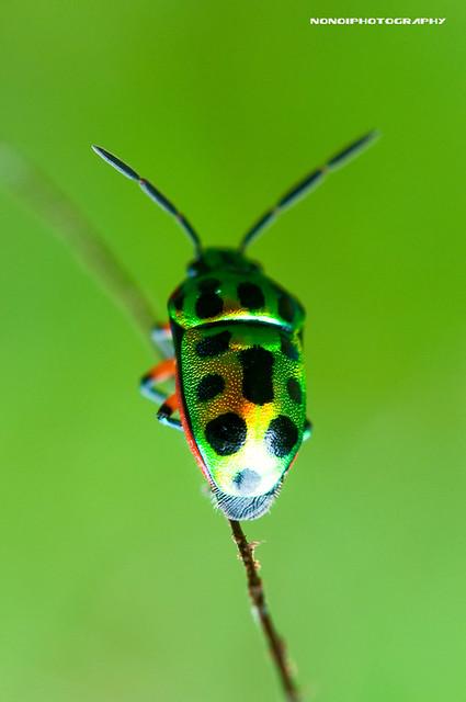 beetle's colorful life ii