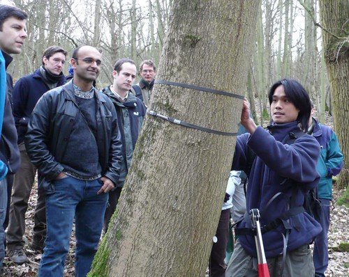 Thu, 01/24/2008 - 17:55 - Kho Lip Khoon demonstrates installation of dendrometer band. Plot leaders Mike Morecroft (near left) and Yadvinder Malhi (near center) look on.  Credit: CTFS