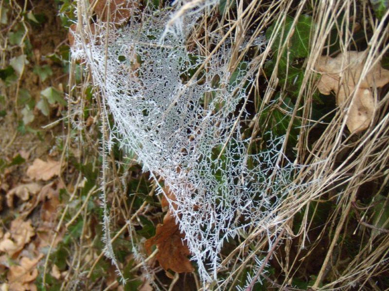 Frozen web Wanborough to Godalming