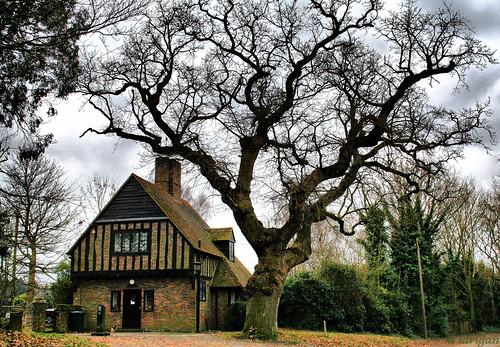 uk winter england tree moss oak unitedkingdom bricks explore soe gatehouse herstmonceux citrit larigan phamilton betterthangood