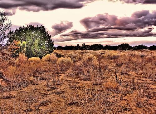 trees tree nature desert mojave juniper mojavedesert mohave desertsunset junipertree mohavedesert quantummottle2 joelach