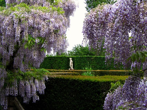 Through the Wisteria at Sissinghurst | by UGArdener