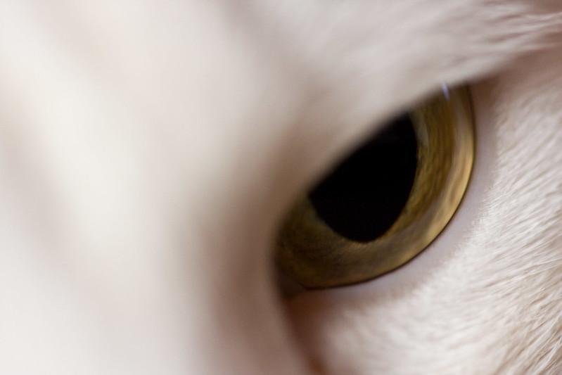 Perls_eye