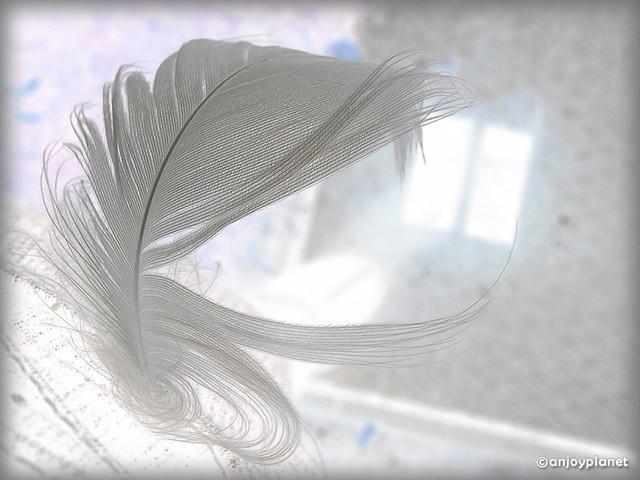 plume de lumiere