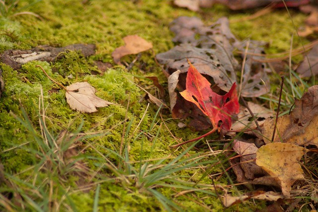 imgp9851 - Forest Floor