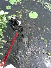 Swimming in sludge