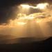 Late July evening, Conon Basin, Highlands, Scotland.
