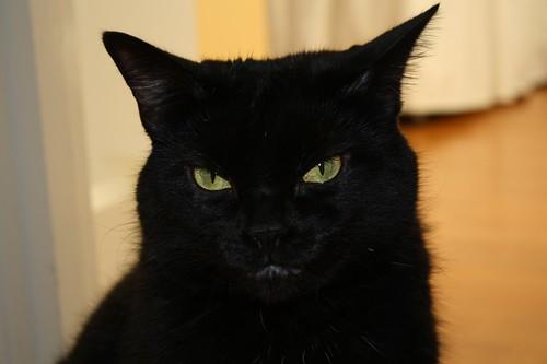 Cat | by iHaveSeenBetter