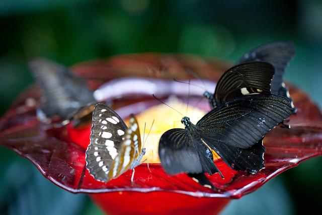 Butterfly Palace 5959