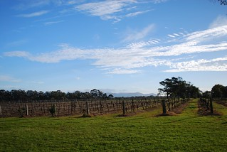 Vineyards - Majors Lane Winery | by avlxyz