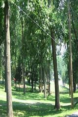 nevin park 2