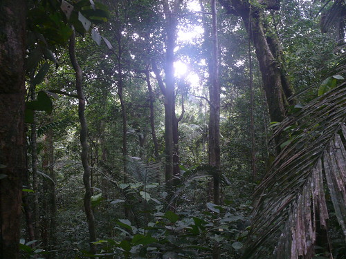 Siberut forest   by East Asia & Pacific on the rise - Blog