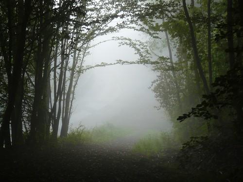 street morning trees summer mist fog forest germany deutschland europa europe nebel path sommer strasse earlymorning hidden nrw wald bäume bergischesland morgen velbert uncertain weg dense morningmist pfad noview schlechtesicht