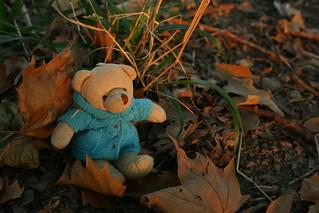 Un osito en otoño   by Contando Estrelas