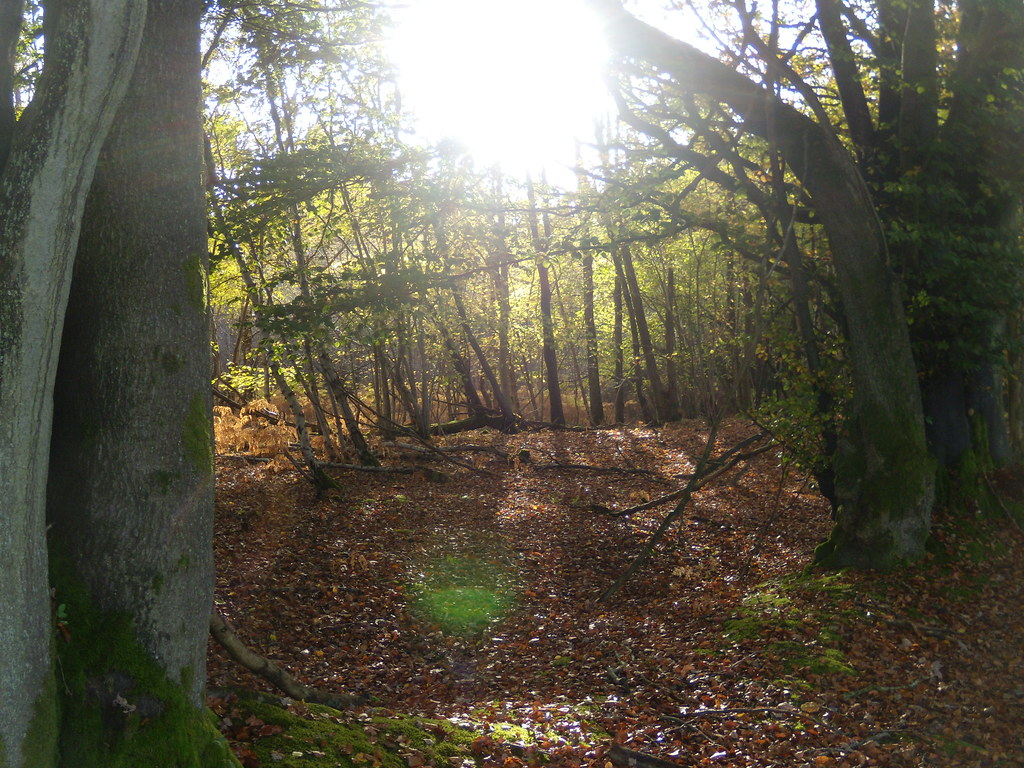 Autumn trees 4 Witley to Haslemere