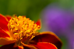 upside down daisy
