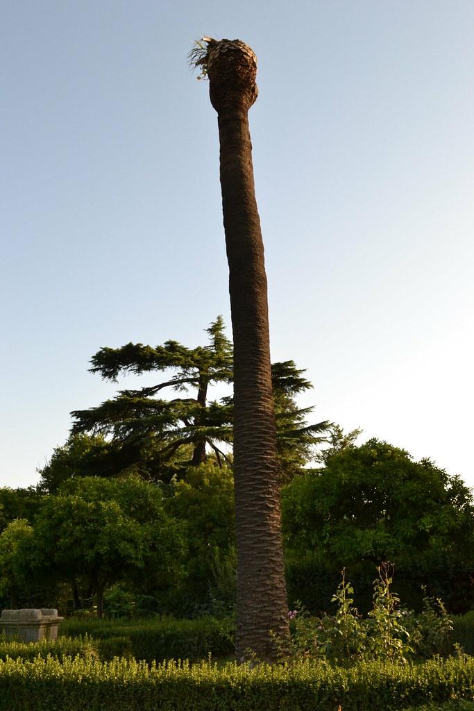 Baum In Englisch