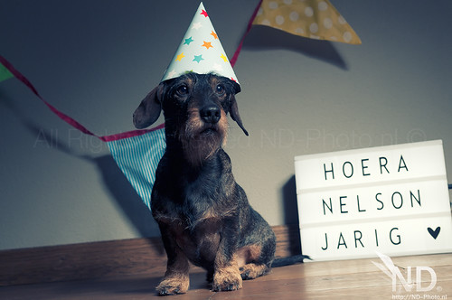 Nelson's 5th Birthday 08-01-2017 | by ND-Photo.nl