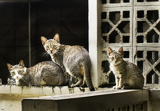 Street Cats | by Beegee49