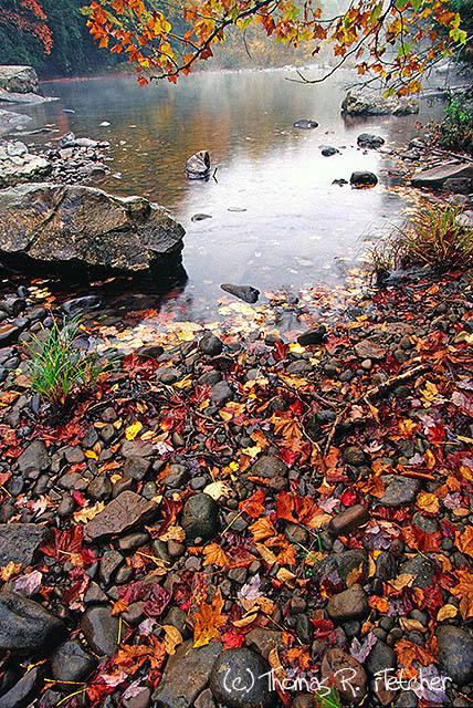 Williams River, Monongahela National Forest, USA, West Virginia