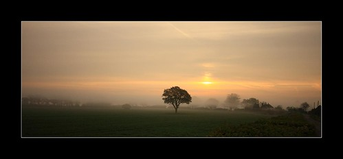 morning panorama mist tree field sunrise platinumphoto vosplusbellesphotos