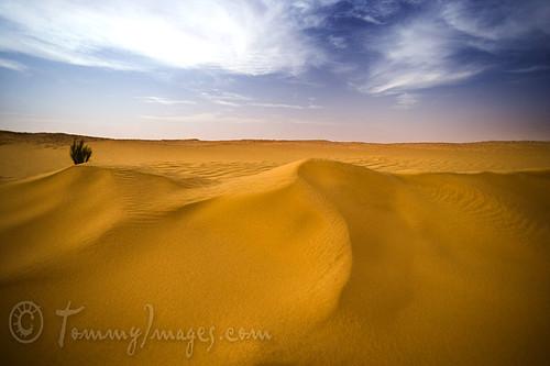 algeria northafrica arab algerie sanddunes alger saharadesert hassimessaoud ouarglaprovince