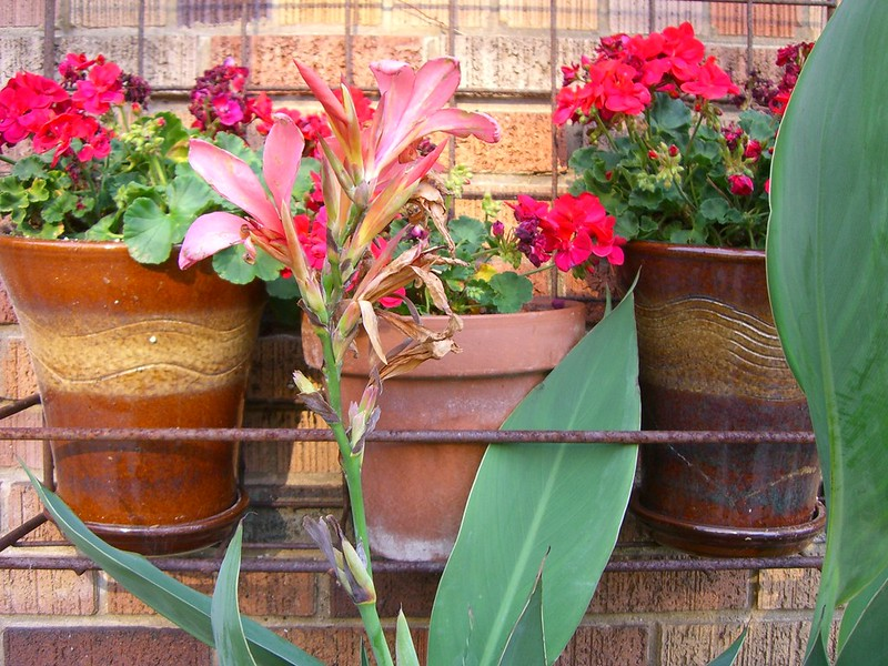 Flowerpots.