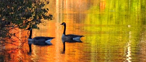 autumn newyork fall reflections pond cornell fingerlakes naturesfinest sapsuckerwoods