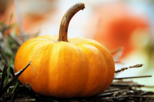 Gourd Pumpkin Autumn Fall Dallas Texas Arboretum Halloween Season DSC_7738