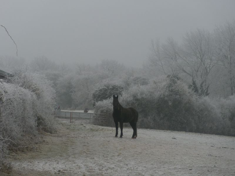 Black horse This horse had icicles on its whiskers. Wanborough to Godalming