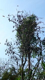 Daytime Bats? | by Augapfel