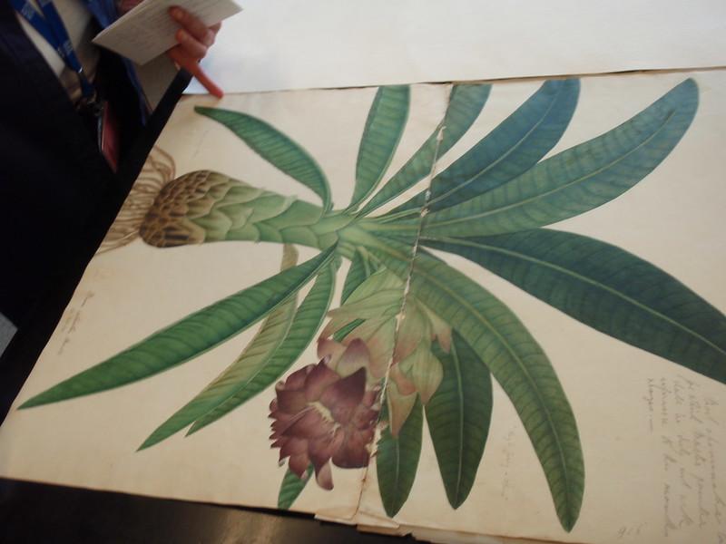 kew herbarium (19)
