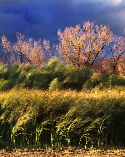 trees storm landscape wind lakeperris morenovalley