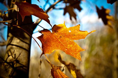 park autumn canada nature canon leaf quebec montreal ile canondslr parc lightroom bizard 50d canonef24105mmf4lisusm canoneos50d boisdelîlebizardnaturepark parcnatureduboisdelîlebizard