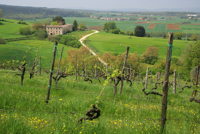 Paisaje de Monteriggioni I