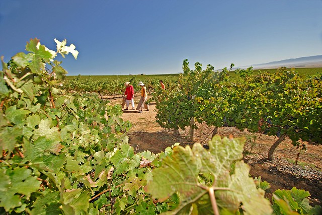Swartland Wine Route - South Africa
