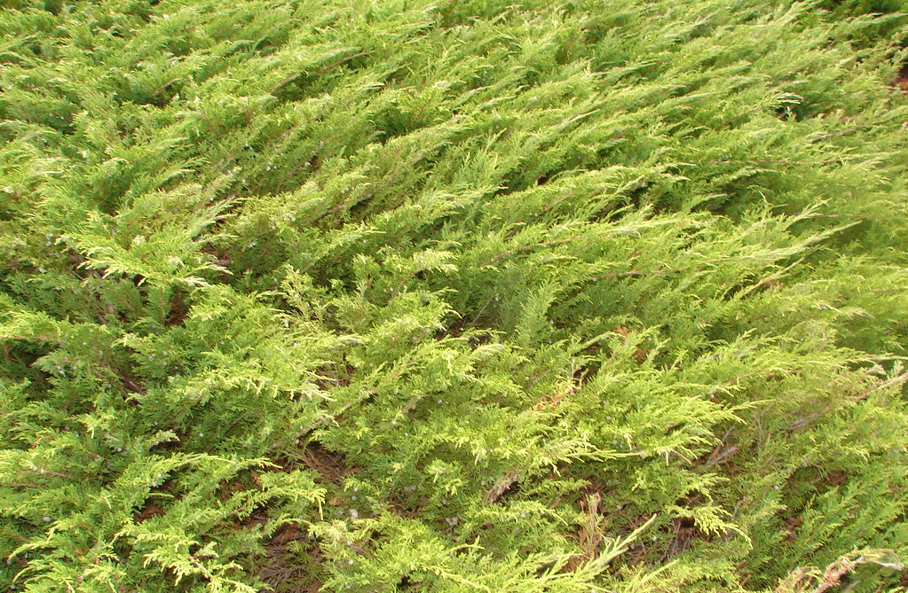 grass.1JPG