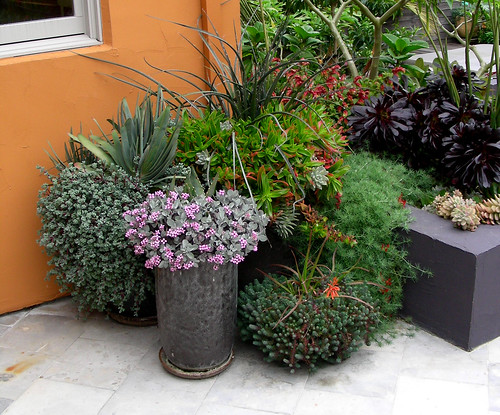 Color Echoes with pots and plants