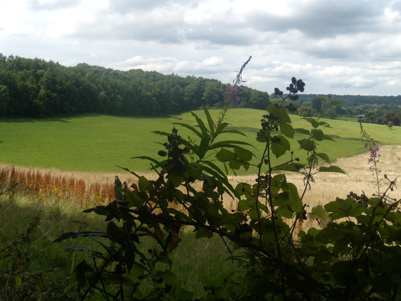 Plants with view Wanborough to Godalming